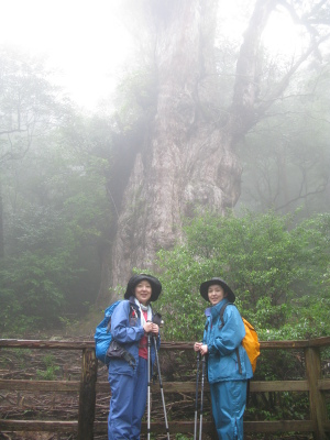 20081024j縄文杉