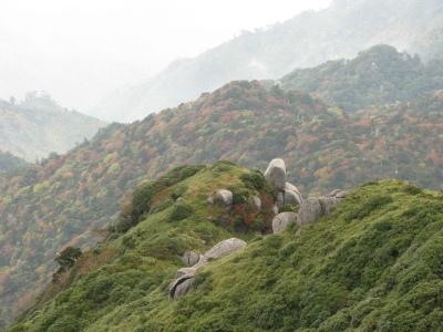 20081107屋久島の紅葉