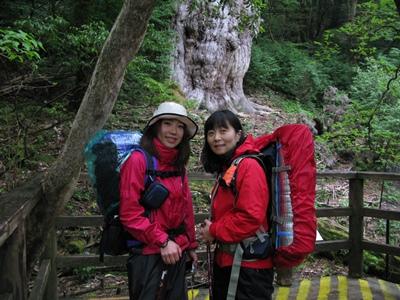 20100528j1泊縄文杉