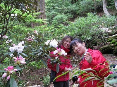 20100528j2縄文杉高塚小屋前のシャクナゲ