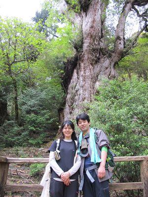 20110517j縄文杉