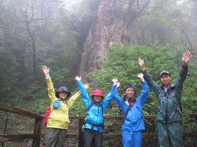 縄文杉20111027k