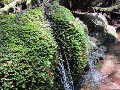 屋久島の苔20120510y2