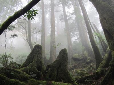 苔むすヤクスギの森20141122