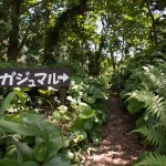 猿川ガジュマル入口