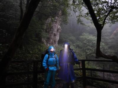 霧の縄文杉