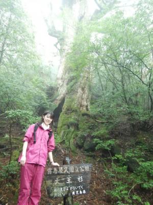 大王杉です!