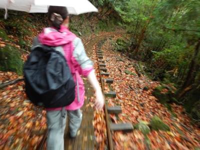秋のトロッコ道