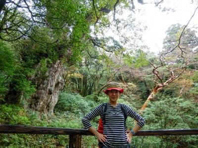 縄文杉2015