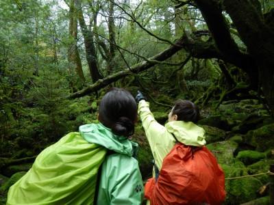 白谷雲水峡ツアー20151122