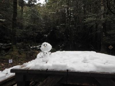 白谷雲水峡ツアー白谷小屋の雪ダルマ