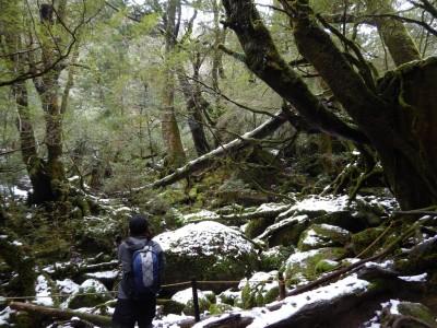 白谷雲水峡ツアー雪化粧をする苔むす森