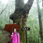 雨に潤うヤクスギランド