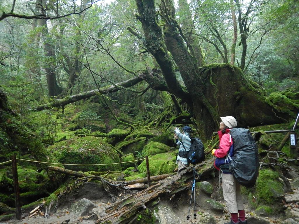 白谷雲水峡 苔むす森にて
