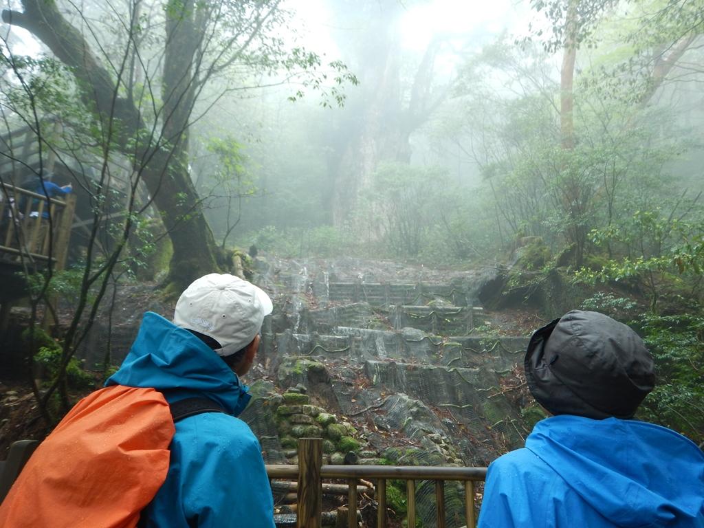 霧が出て幻想的な縄文杉