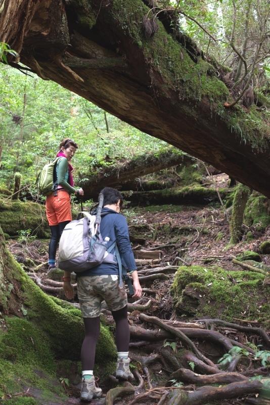 ヤクスギランドの巨木の森を進む