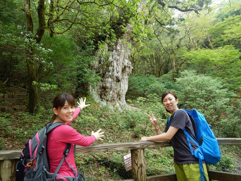 厳しい登りもありましたがさくっと縄文杉に到着です!