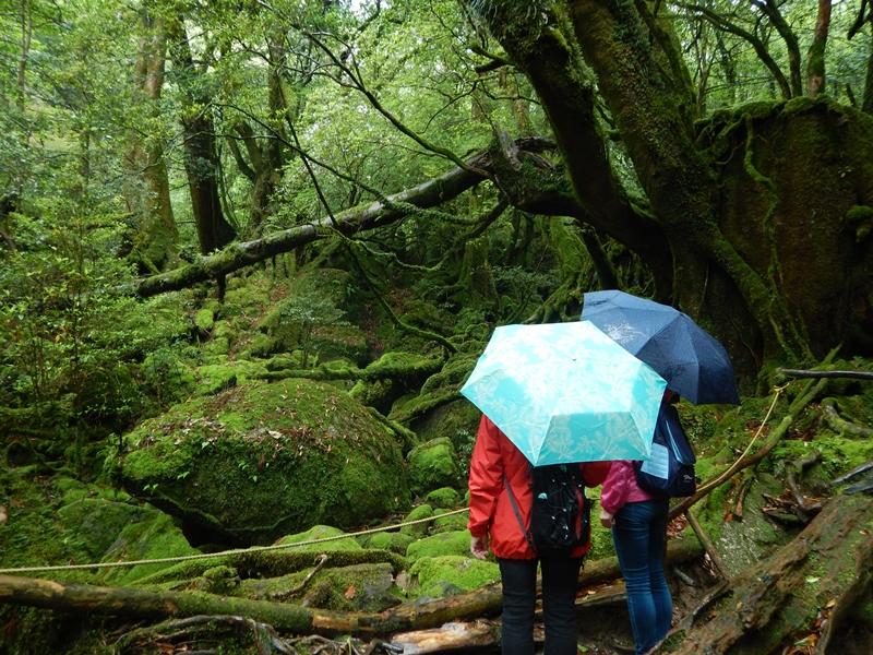 白谷雲水峡 苔むす森
