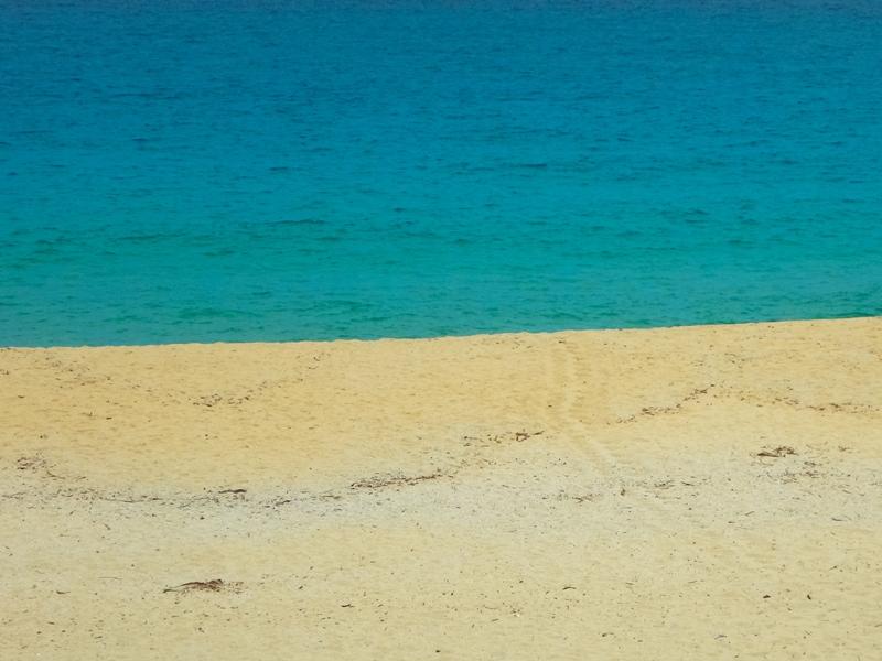 いなか浜 ウミガメの足跡