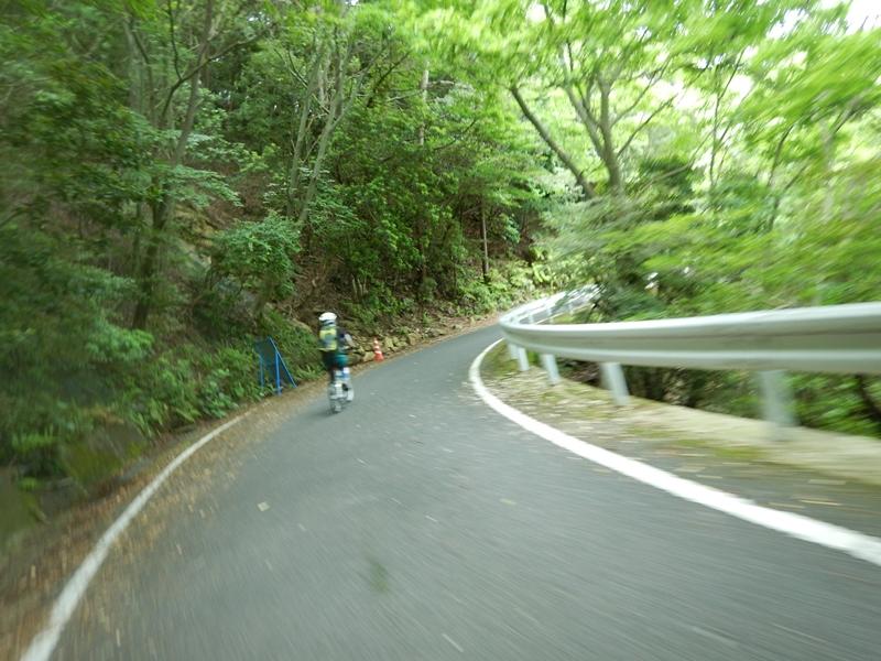 緑のトンネルを駆け抜ける