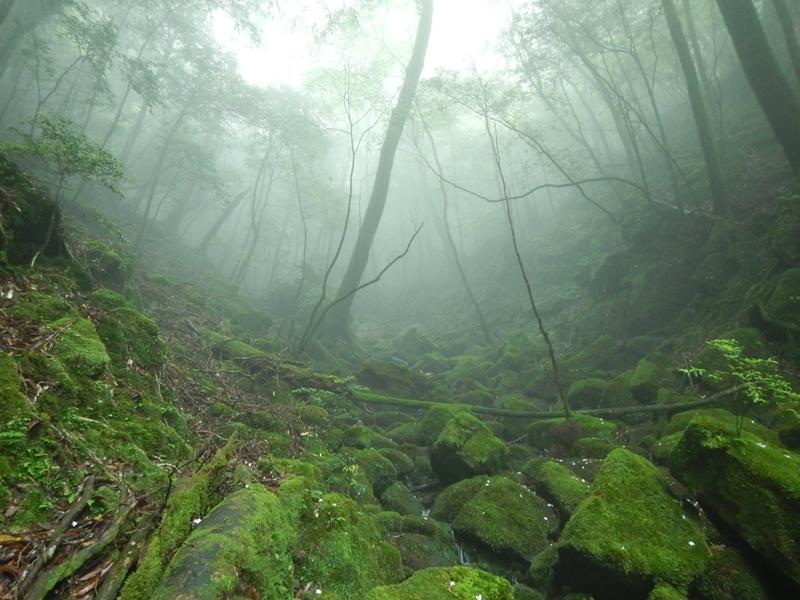 霧が出て幻想的な白谷雲水峡でした