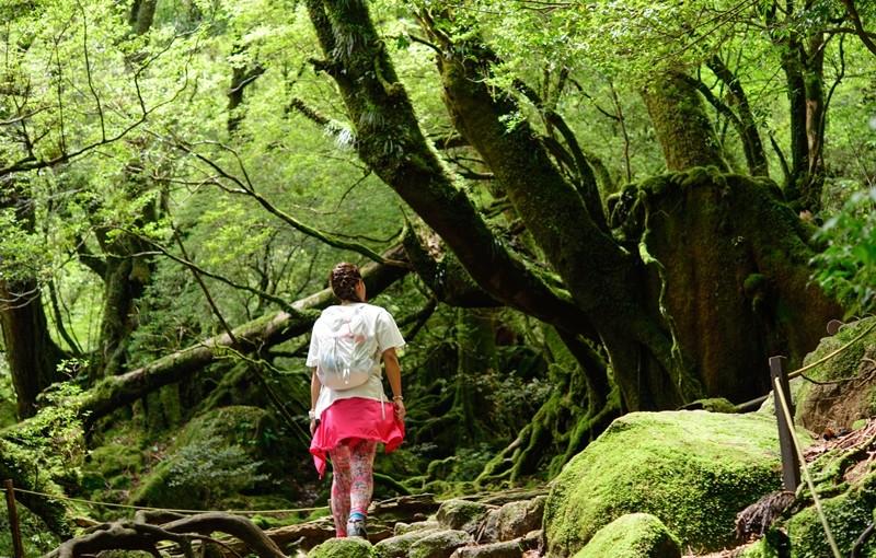 白谷雲水峡 苔むす森 20160605