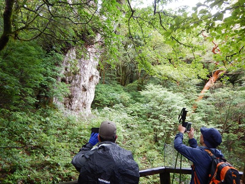 いいペースで縄文杉へ。記念撮影もばっちり