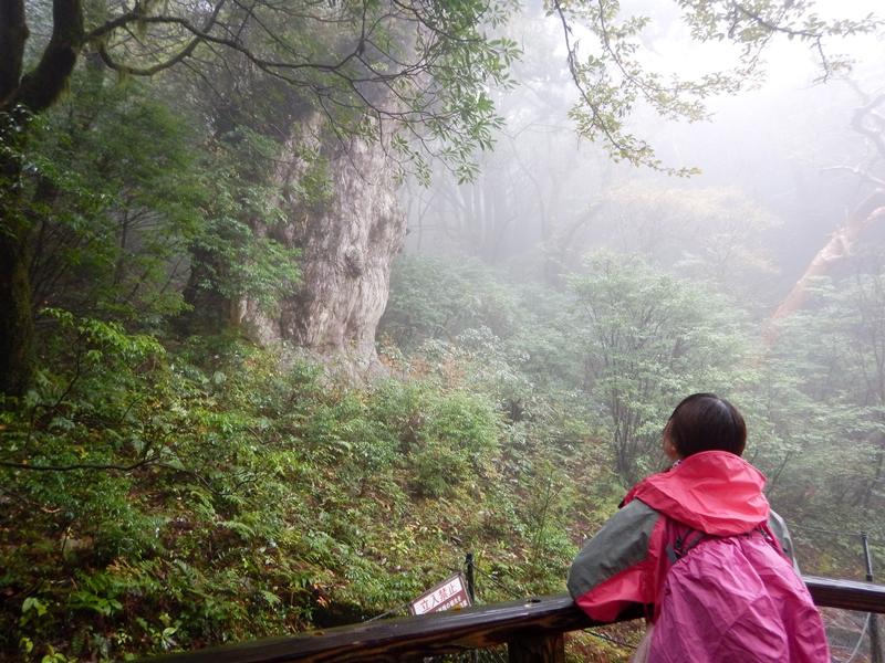 20161118縄文杉