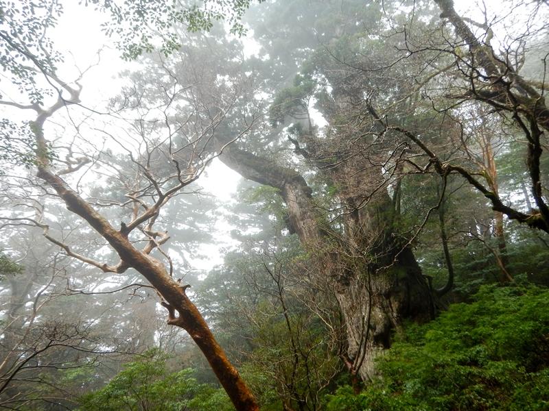 縄文杉北側展望デッキ20170330