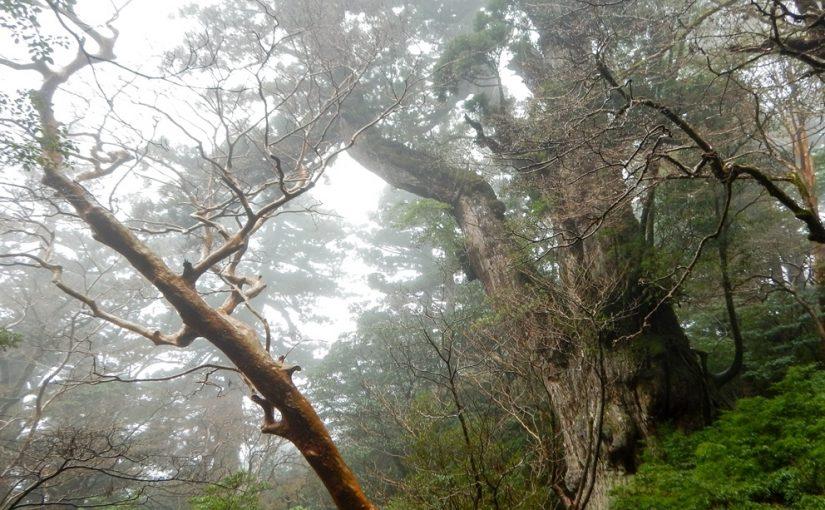 [お客様の声] 2017年11月11日 12日 縄文杉と白谷ツアー/石田様より