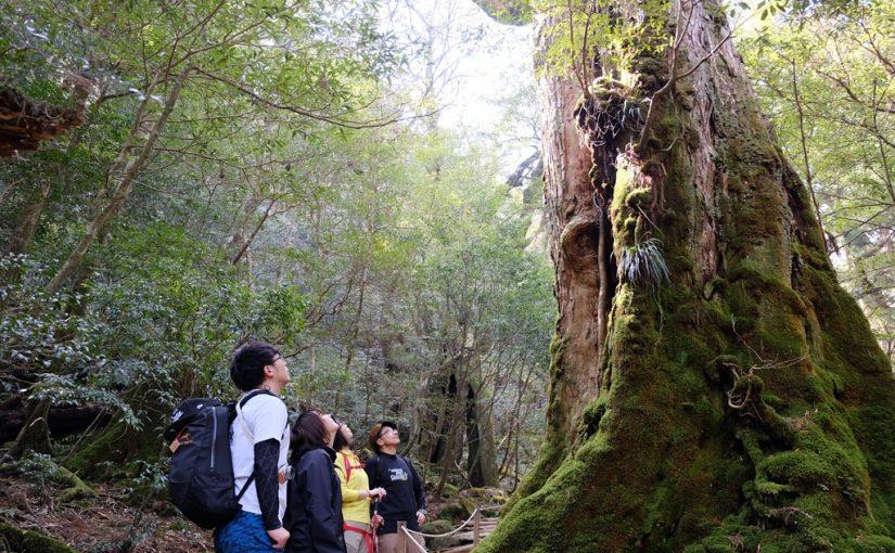 [お客様の声] 家族貸切 縄文杉と白谷雲水峡ツアー 2018年3月28日
