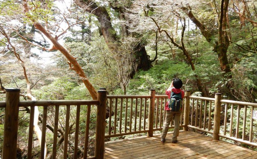 縄文杉と白谷雲水峡 貸切ツアー