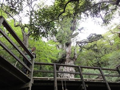 縄文杉にて20130521