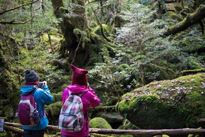 20141207s苔むす森