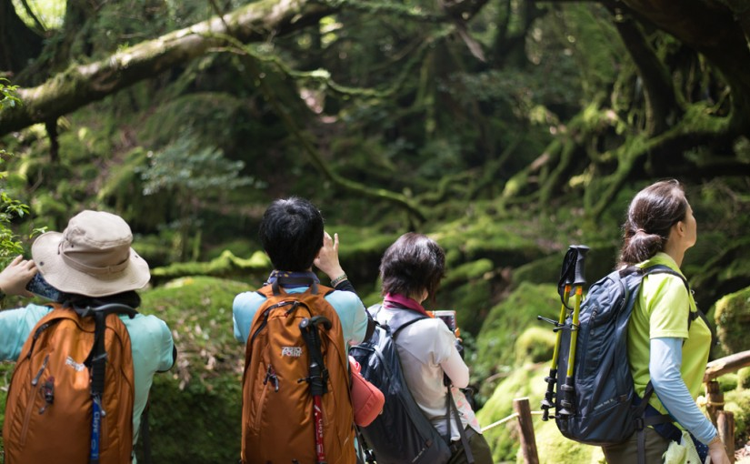 白谷雲水峡 苔むす森 「屋久島」
