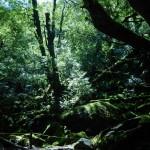 苔むす森にも日が差し込む