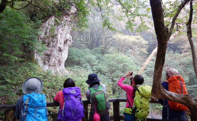 秋の縄文杉トレッキング