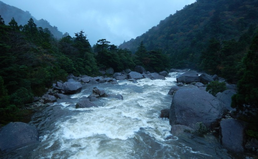 大雨で増水する安房川 小杉谷橋より