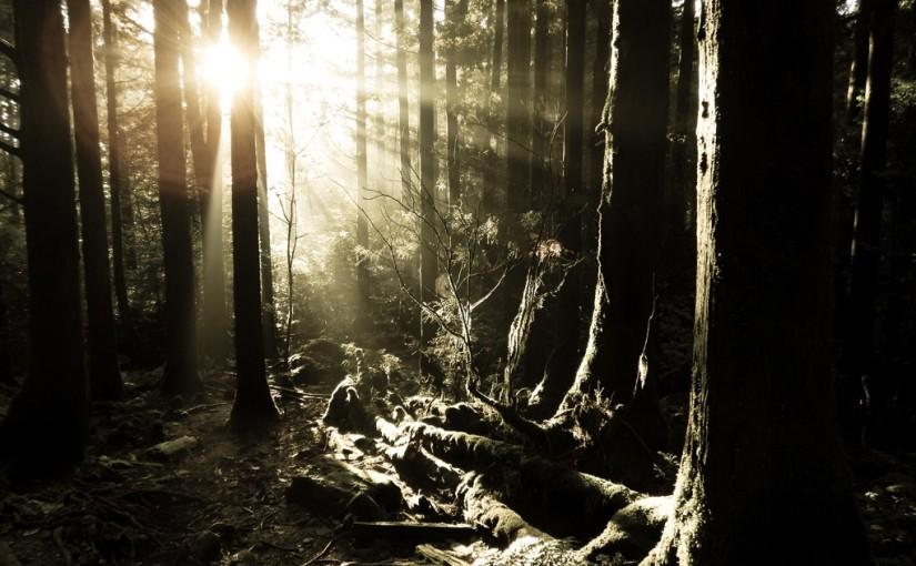 朝日の差し込む森