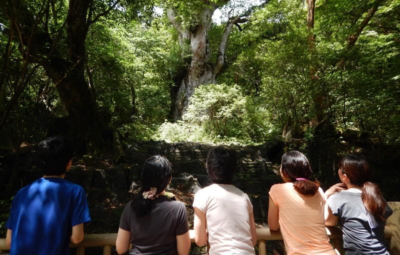 朝早くからたっぷりの縄文杉ツアーです。