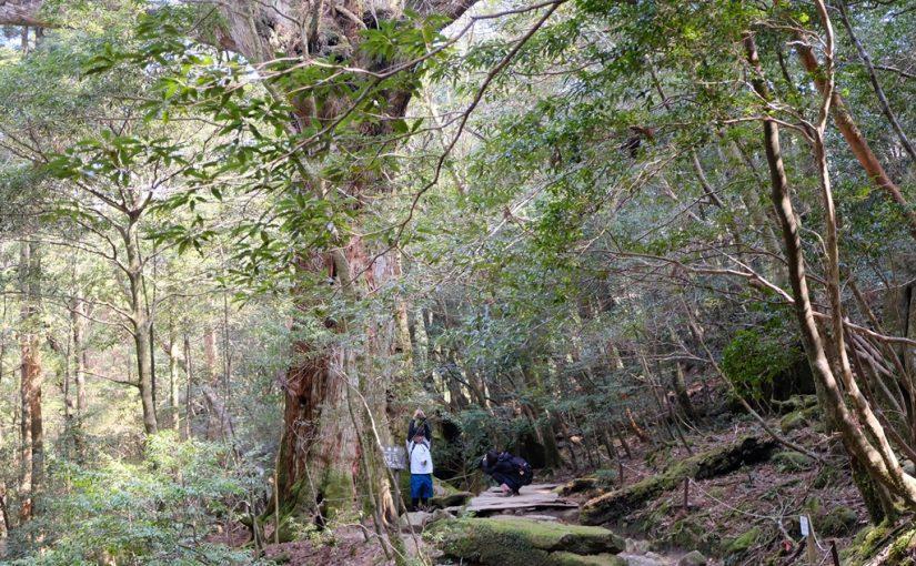 屋久島の大自然を堪能