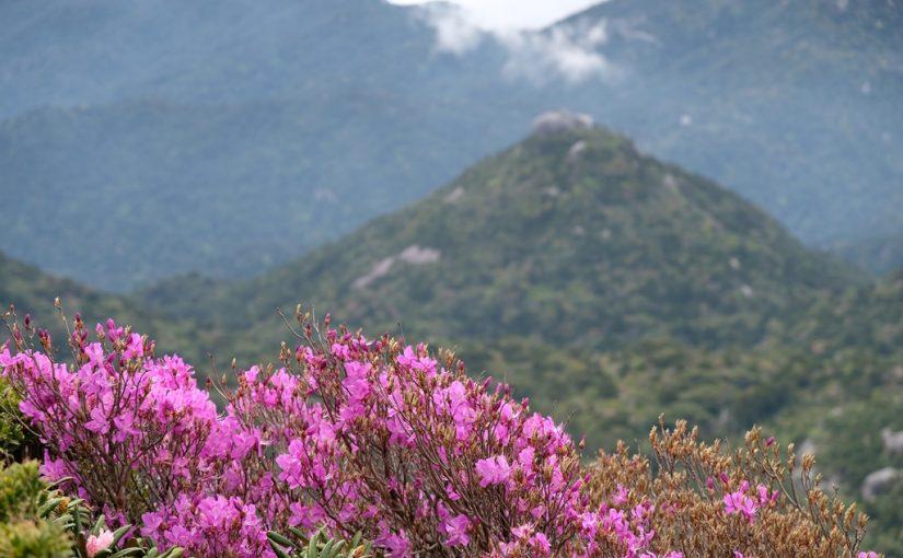 2回目、3回目の屋久島に 黒味岳ツアー
