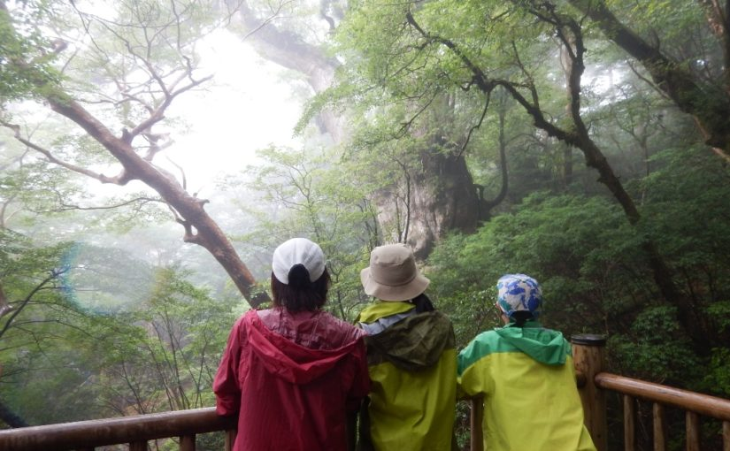 3姉妹で縄文杉!