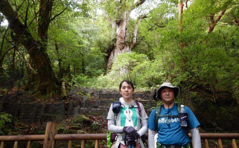 貸切 縄文杉と白谷雲水峡
