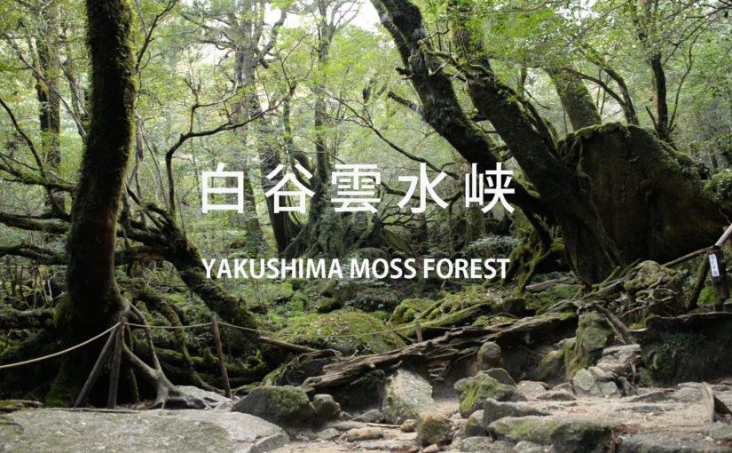 半日白谷ツアー 苔むす森。動画アップしました!