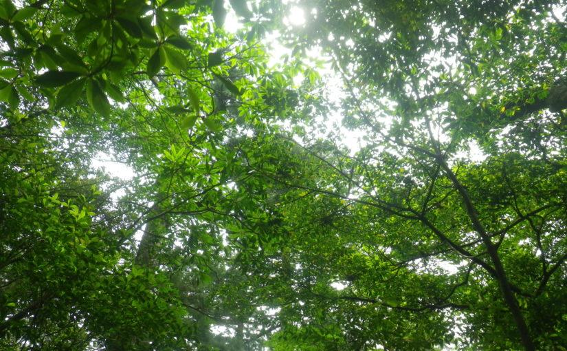 癒しの森へ