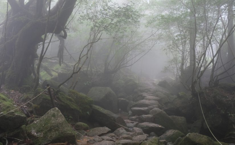 霧を抜けて