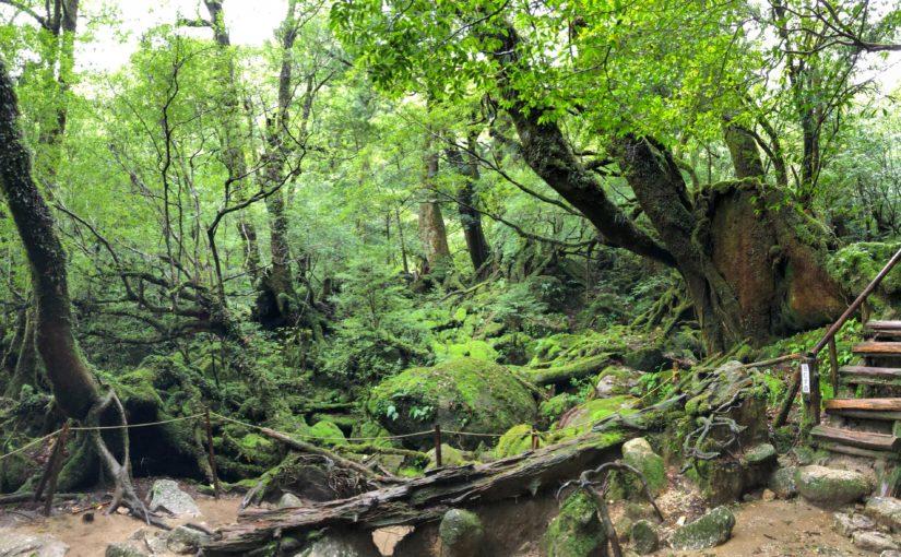 苔むす森へ