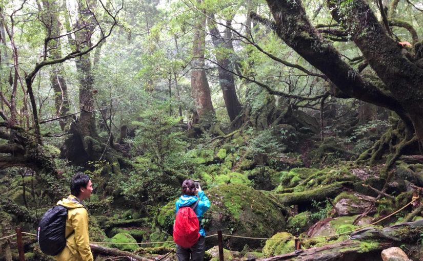 苔むす森とカヤック