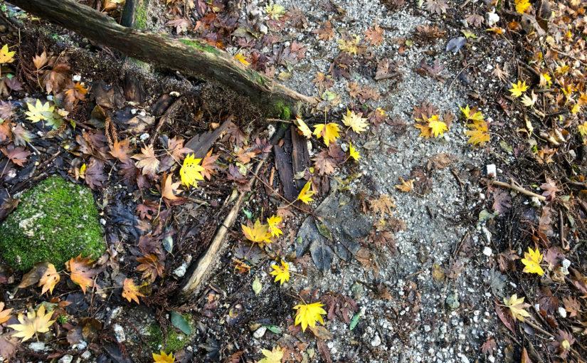 秋も深まる